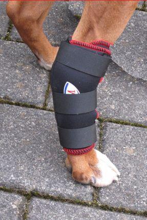 TSM vet-Reha-Bandage Hinterbein ihres Hundes